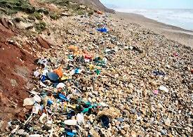 SAS Beach Clean