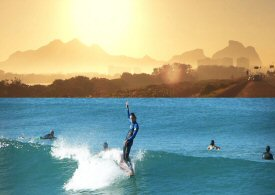 Classic longboard, penguins and dolphins in Rio de Janeiro.