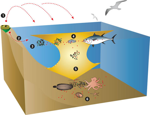 Illustration by Woods Hole Oceanographic Institution.